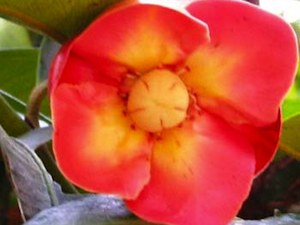 About Us - Wyalla GardensWyalla Gardens