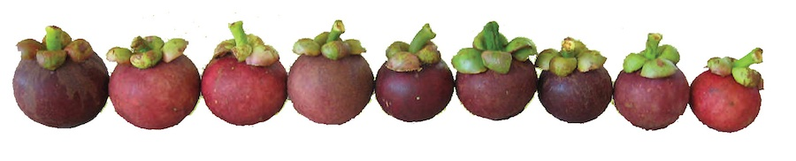 selecting your mangosteen
